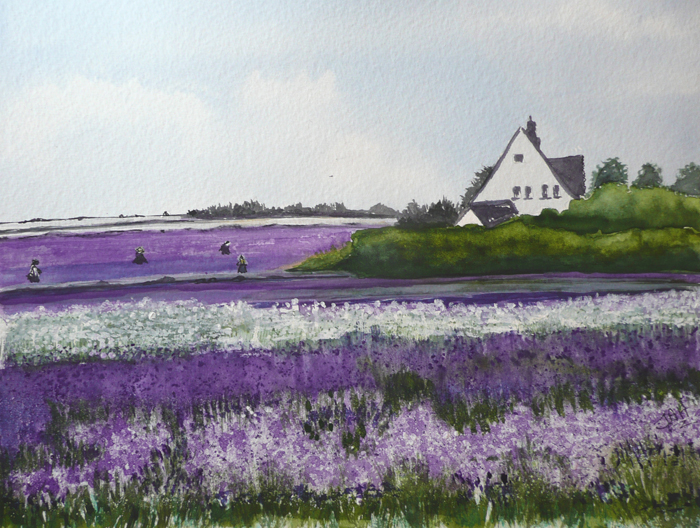Lavender Fields Snowshill. Giclee print and cards available